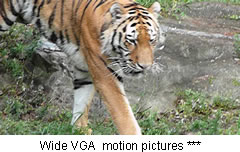 Wide VGA  motion pictures ***.