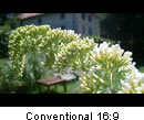 Conventional 16:9