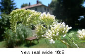 New real wide 16:9