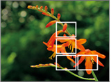 EXILIM automatically positions focus frames according to image conditions.