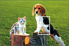 EXILIM detects subjects and positions focus frames in the optimum locations.